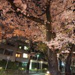 桜キレイ〜。VOICEから市役所へ向かう桜並木